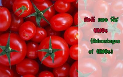 ข้อดี ของ พืช GMOs (Advantages of GMOs)