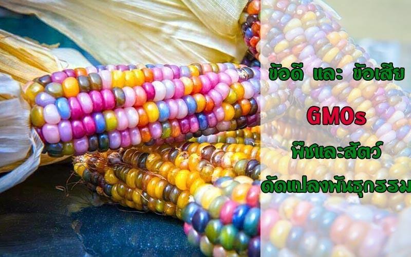 GMOs พืชและสัตว์ดัดแปลงพันธุกรรม ดีหรือไม่ดี