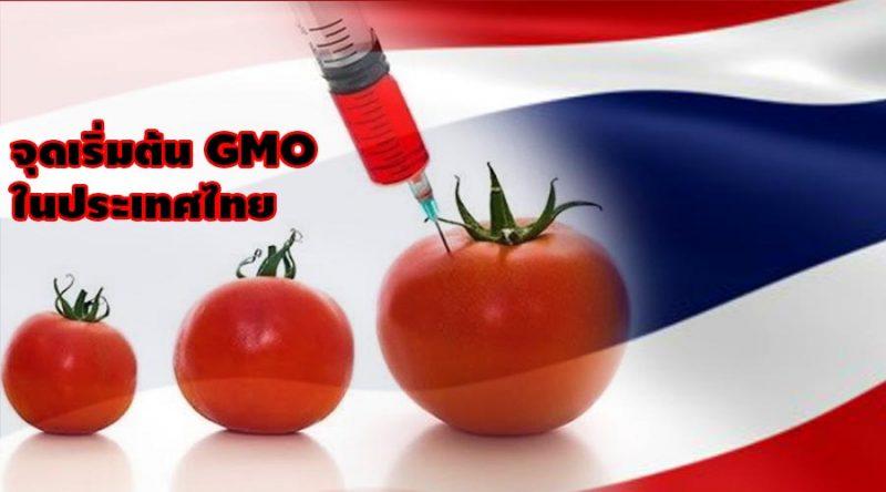 จุดเริ่มต้นของ GMO ในประเทศไทย