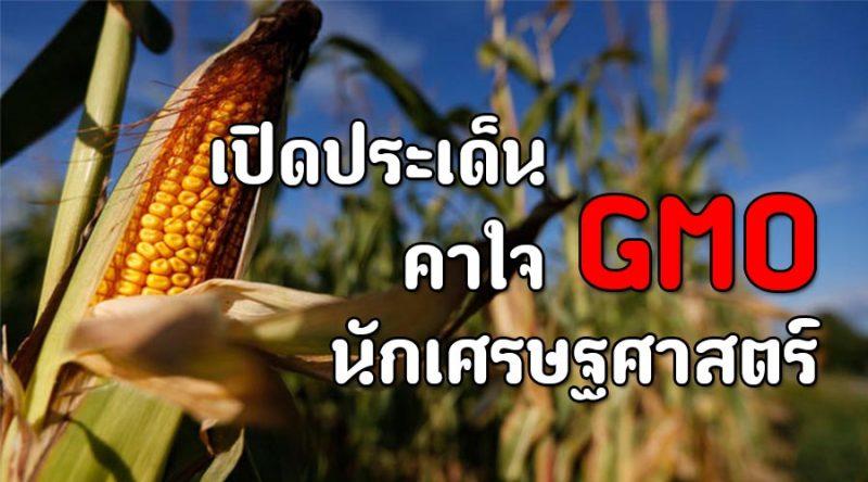 10 คำถามคาใจเรื่อง GMO โดยนักเศรษฐศาสตร์