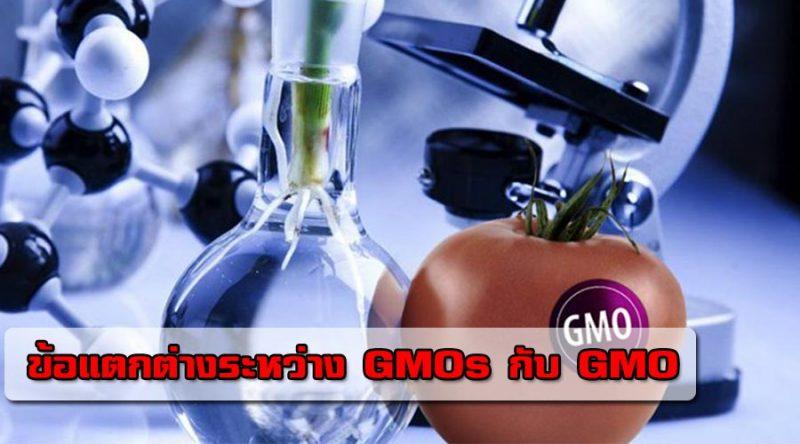ข้อแตกต่างระหว่าง GMOs กับ GMO