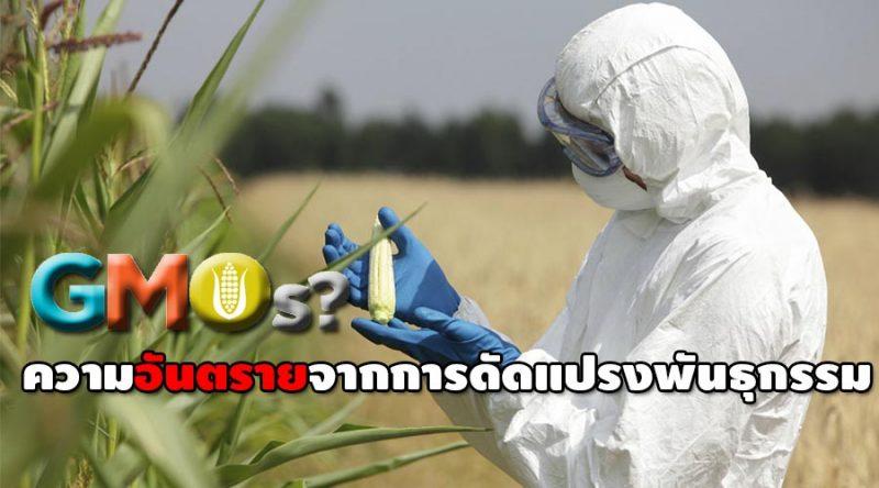 GMOs ข้อควรรู้ ความอันตรายจากการดัดแปรงพันธุกรรม